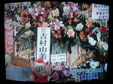 吉村由美さんからサボテン