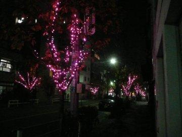 浅草観音うら冬の一葉桜まつり