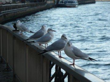 鳥@隅田川