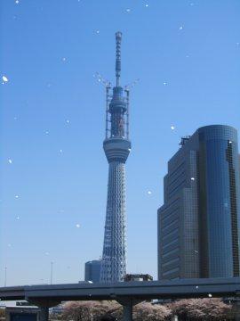 東京スカイツリーと桜吹雪