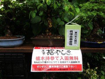 浅草お富士様植木市